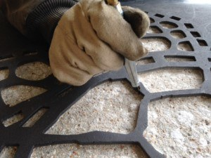 Cleaning the edges of the decorative concrete mosaic turtle using the Wasp.